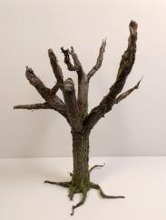 arbre_cola06