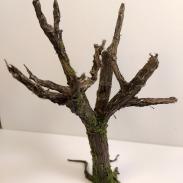 arbre_cola07