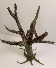 arbre_cola08