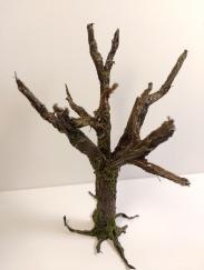 arbre_cola09
