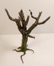 arbre_cola10